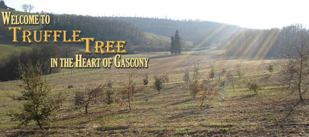 Welcome to Truffle Tree in the Heart of Gascony