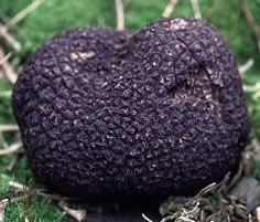 Black Diamond Truffle